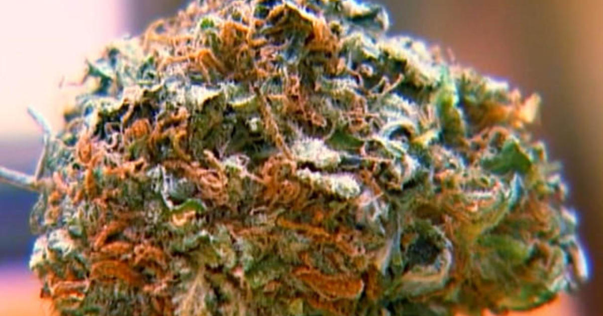 Study: U.S. pot use doubled in the last decade