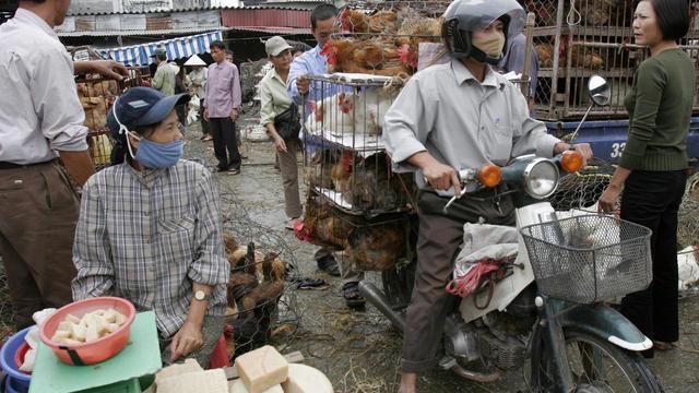 Vietnam Bird Flu Crisis