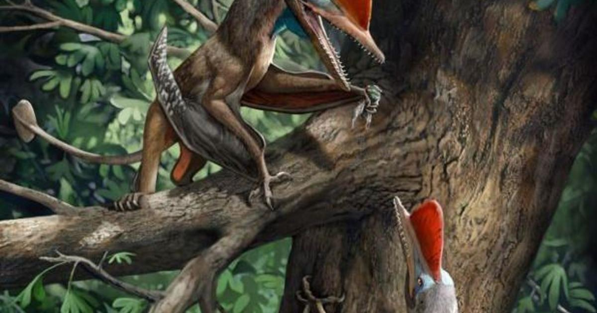 """Scientists discover the """"Monkeydactyl"""" — a Jurassic-era flying dinosaur with opposable thumbs"""