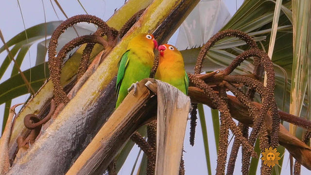 naturelovebirds-695589-640x360.jpg