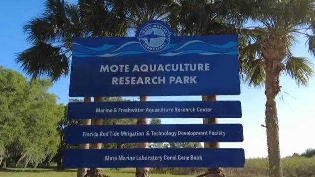 cbsn-fusion-aquaculture-research-park-redefining-what-it-means-to-be-a-fish-farm-thumbnail-700307-640x360.jpg