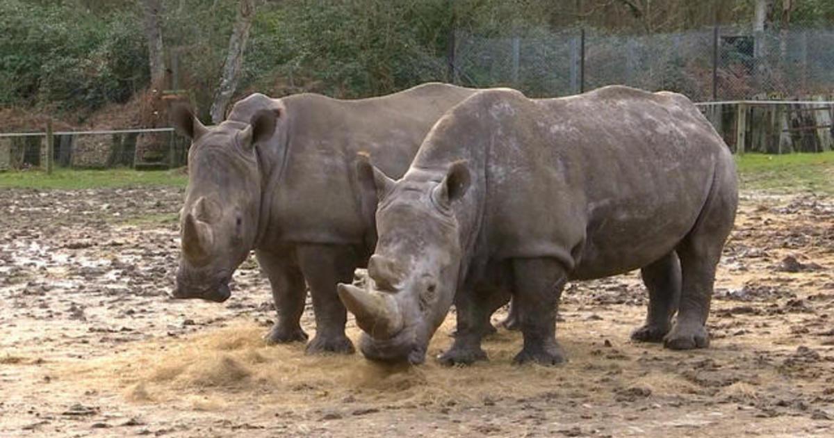 Poachers break into French zoo and kill rhino to steal tusk