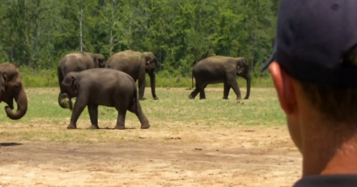 A herd of former Ringling Bros. circus elephants retired to Florida. This is their beautiful new home.
