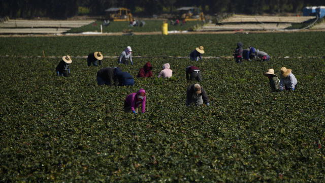 cbsn-fusion-new-mental-health-initiative-will-offer-support-to-migrant-farmworkers-via-zoom-thumbnail-713091-640x360.jpg