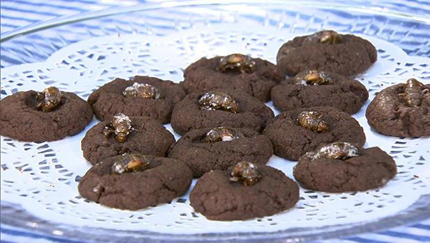 cicada-cookies-620.jpg