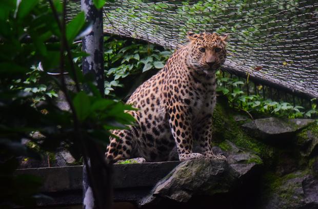 People Visit Hangzhou Zoo