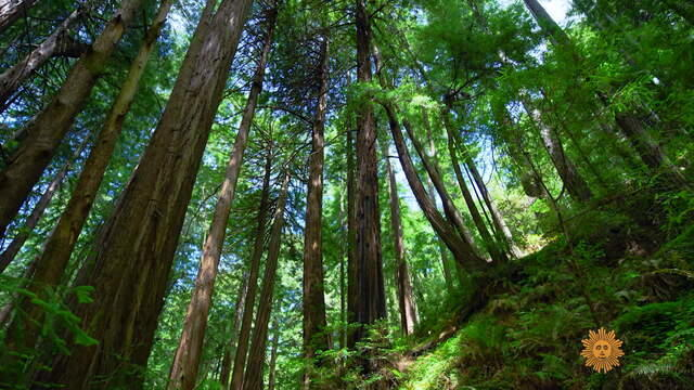 nature-muir-woods1920-729387-640x360.jpg