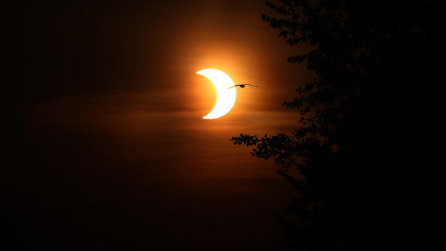 The morning of the eve of Ontario moving into Stage One of COVID-19 reopening is marked with a solar eclipse as viewed from the Beaches
