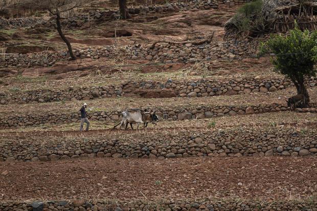 Ethiopia Tigray Famine Looms