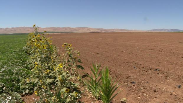 joe-del-bosque-farmland-unused.jpg