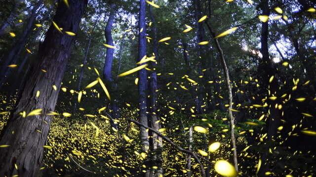 fireflies-756057-640x360.jpg