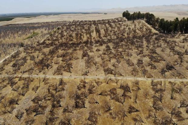 dried-almson-orchards-aerial-photo.jpg