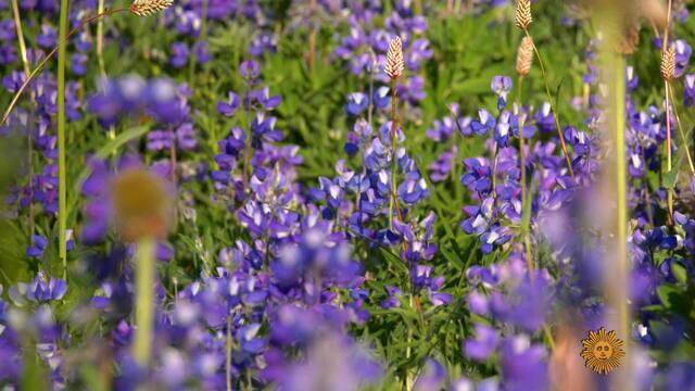 wildflowersb3-776630-640x360.jpg