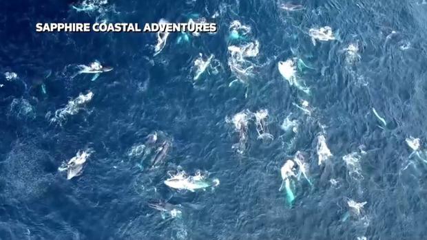 australia-whales-megapod.jpg