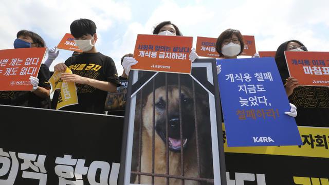 South Korea Dog Meat Day