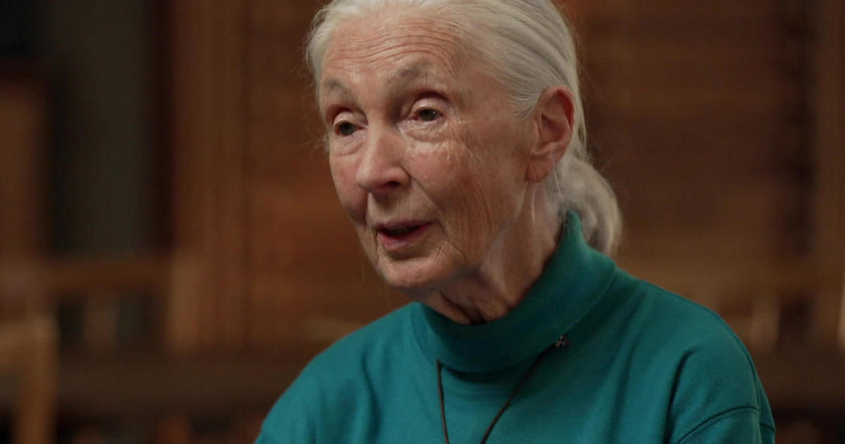 Jane Goodall on her hope for the future