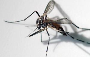 mosquito1920-821911-640x360.jpg
